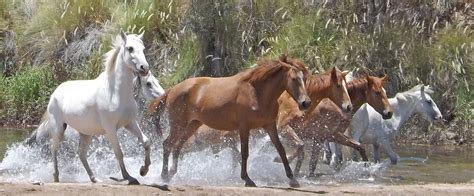 horses wild running water animal global