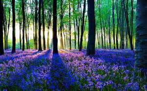 Pretty Forest with Flowers