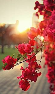 Mobiili taustakuvat HD | Wallpaper nature flowers, Flowers ...