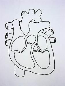 Cardiovascular System Diagrams