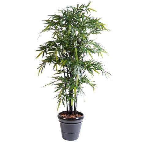 bambou en pot pas cher reverba