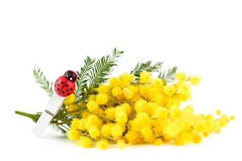 fiori 8 marzo 8 marzo lavoretti fatti in casa da fare con i bimbi