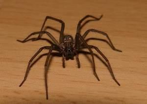 Viele Spinnen Im Haus : wohin mit einer spinne ~ Watch28wear.com Haus und Dekorationen