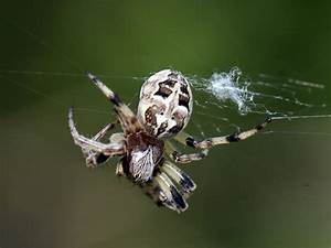 Spider HD Wallpapers & Pictures