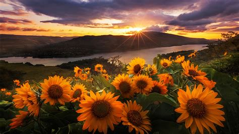 morning sun flowers desktop pc  mac wallpaper