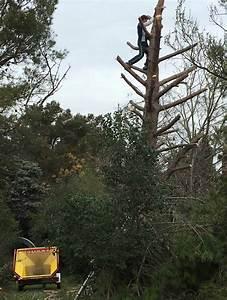 Abattage D Arbres Autorisation : abattage d 39 arbres autorisation pour couper ou abattre un ~ Premium-room.com Idées de Décoration