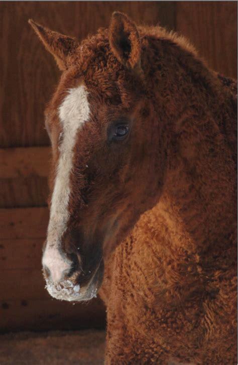 horse horses hypoallergenic some