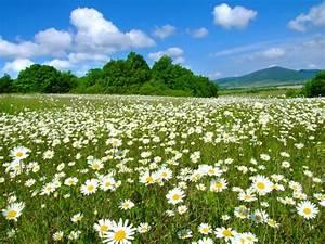 daisy field tumblr | daisy LOVE | Pinterest | Marc jacobs ...