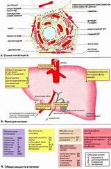 Препараты лечащие метастазы в печень