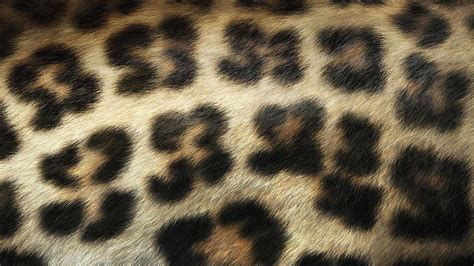 Animal Print Wallpaper - animal print wallpaper
