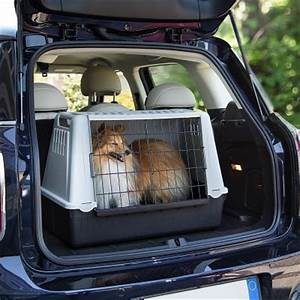 Cage Transport Chien Voiture : ferplast cage de transport atlas car pour chien zooplus ~ Medecine-chirurgie-esthetiques.com Avis de Voitures