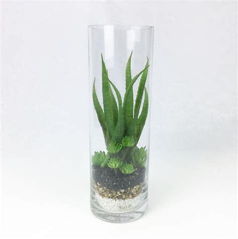ว่านหางจระเข้ปลอม สวนโหลแก้ว สวนขวดแก้ว Succulent plant ...