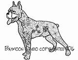 Boxer Coloring Dog Fawn Template sketch template