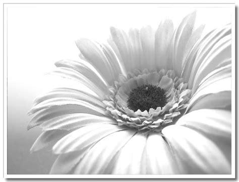 fotobunten macro monochrome blomma
