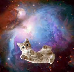 space cat the cat s meow omg cats in space