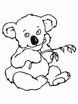 Koala Coloring Pages Bear Printable Colouring Cute Animal Print Designlooter Leaves Easy Getcoloringpages Popular Results Bestcoloringpagesforkids 1600px 52kb 1200 Printablecolouringpages sketch template