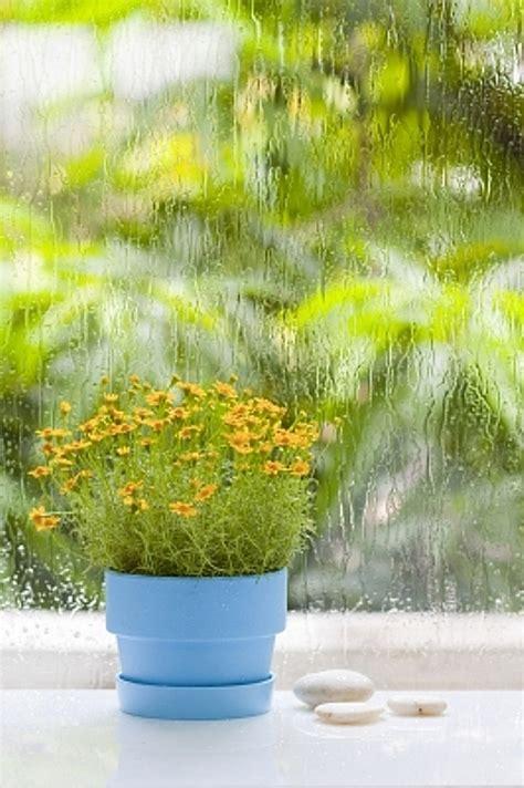 plante de bureau feng shui plante de bureau feng shui 28 images le feng shui se