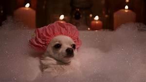 Chihuahua | Beverly Hills Chihuahua 2 Blu-ray Screen Shot ...