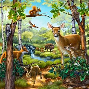 Wertheim Illustration | Animals & Plants