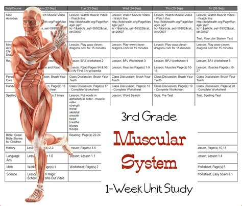 Learn The Muscular System {third Grade Unit Study}  3 Boys And A Dog