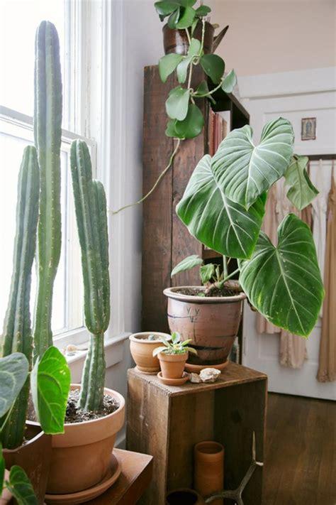 elephant house plant plant o pedia elephant ear elephant ears cactus and house