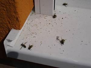 Wie Vertreibe Ich Wespen : wespen in fassade rolladen bauforum auf ~ Orissabook.com Haus und Dekorationen