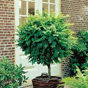 Arbre En Pot : les 25 meilleures id es de la cat gorie arbres en pots sur ~ Premium-room.com Idées de Décoration