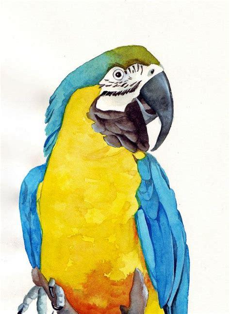 parrot   watercolor art watercolor paintings