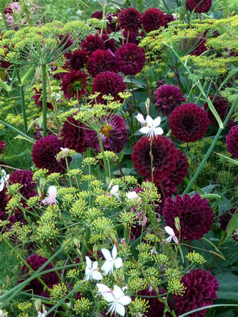 My Favorite Plant Combinations 18 (my Favorite Plant