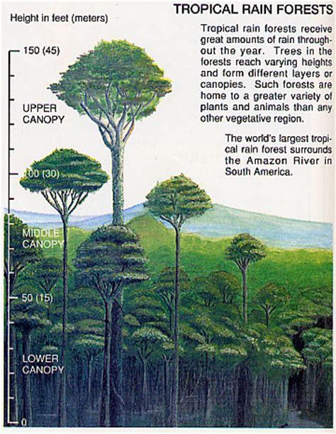 Adaptations of Tropical Rainfore
