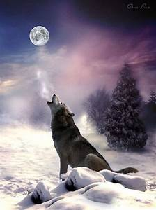 Wolf Song | And YOU Pinned •¿•? | Pinterest
