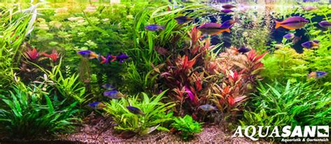 wie warm muss ein aquarium sein kahmhaut im aquarium das muss nicht sein so geht 180 s aquasan aquaristik de