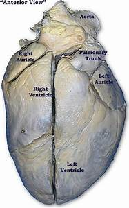 36 Best Images About Anatomy On Pinterest