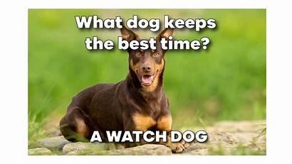 Dog Memes Funny Entegra Meme Signature Structures