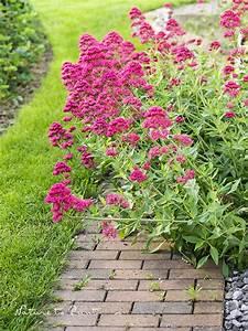 Winterharte Blumen Für Den Garten : die 12 besten dauerbl her im garten sind superstauden ~ Whattoseeinmadrid.com Haus und Dekorationen