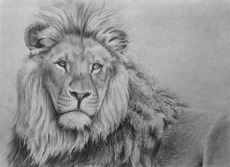 draw  lion  pencil  art lessons