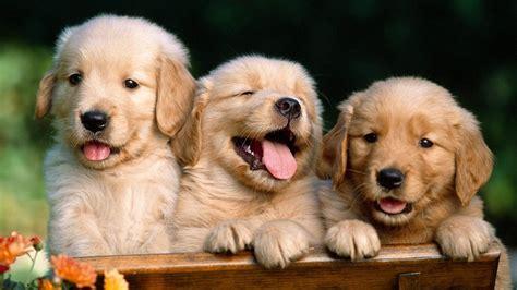 cute animal wallpapers  desktop  images