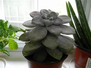 Aloe Vera Ikea : unidentified succulent from ikea ~ Preciouscoupons.com Idées de Décoration