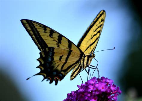 Nature, Wing, Sunlight, Flower, Spring