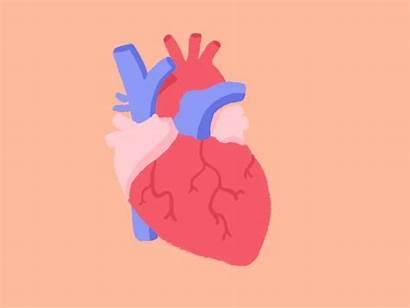 Heart Beating Animation Hand Drawn Dribbble