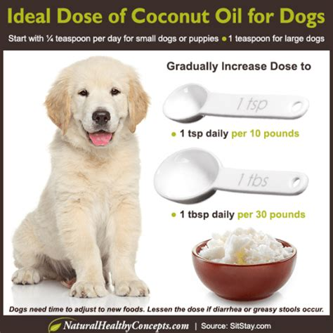 benefits  coconut oil  dogs michele taylor fitness