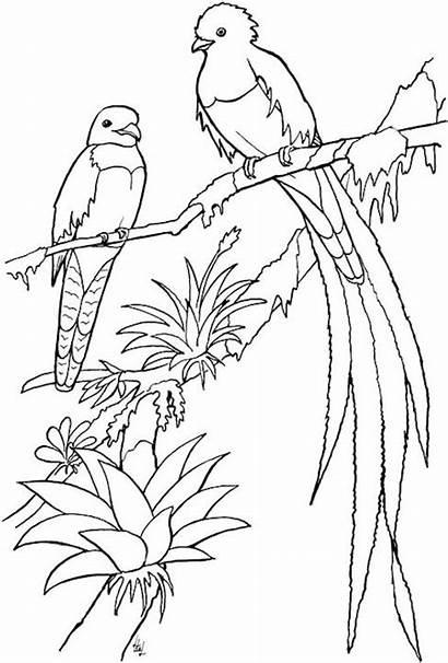 Coloring Bird Quetzal Adult Birds Printable Adults