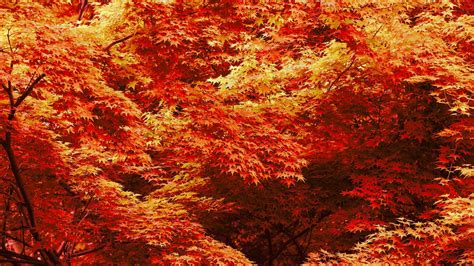 Fall Backgrounds For Desktop by Cool Fall Backgrounds 69 Images
