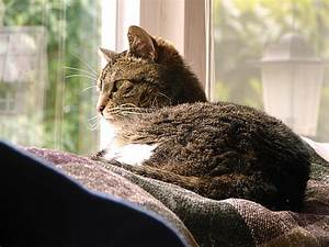 Jouets Pour Chats D Appartement : vivre avec un chat en appartement ~ Melissatoandfro.com Idées de Décoration