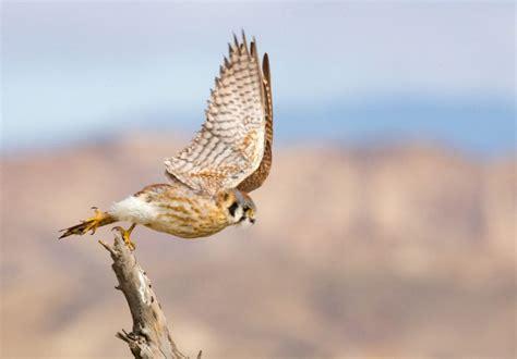 guide  oregon birds portland audubon