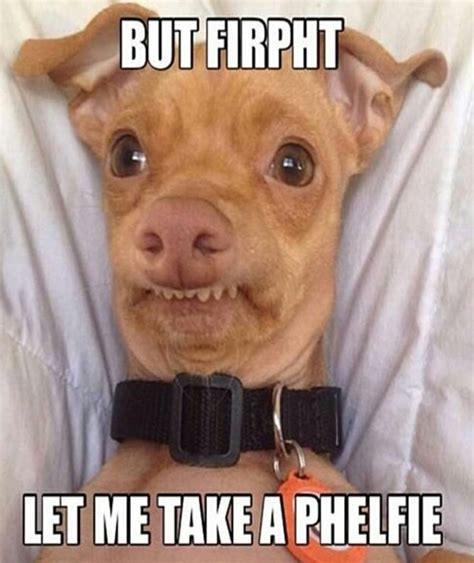 Hilarious Images Pictures Of Dogs With Captions Ideas Best