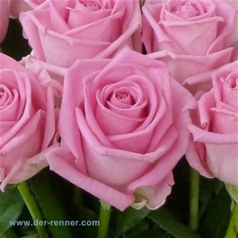 So Finden Sie Die Passende Rosensorte by Aqua In Pink 20 St 252 Ck Blumen F 252 R Hotel