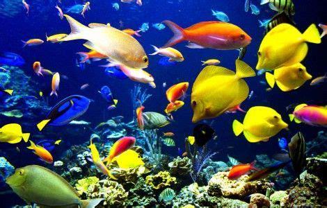 fonds d 233 cran anim 233 s gratuits aquarium aquaruim anime gratuit ecran anim 233 et