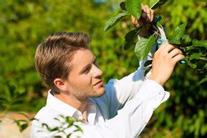 wann pflanzt obstbäume obstbaumschnitt anleitung zum schneiden obstb 228 umen