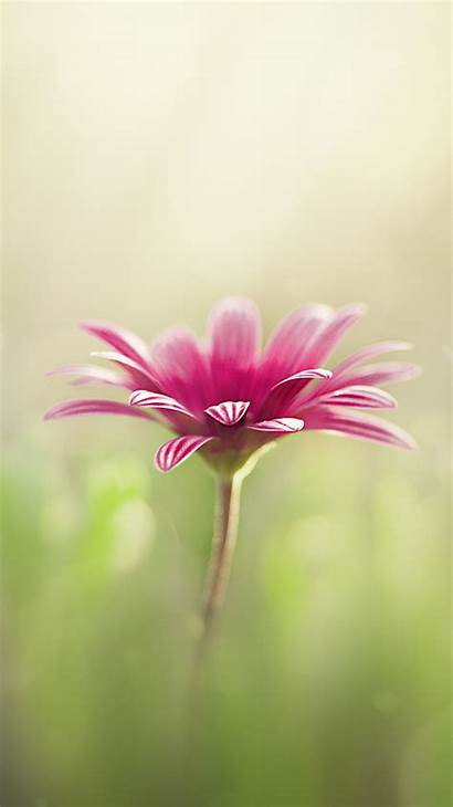 Iphone Flower Wallpapers Backgrounds Se